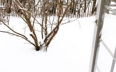 De nemmeste krydderurter til krukker og altankasser – uge 6-7 i haven