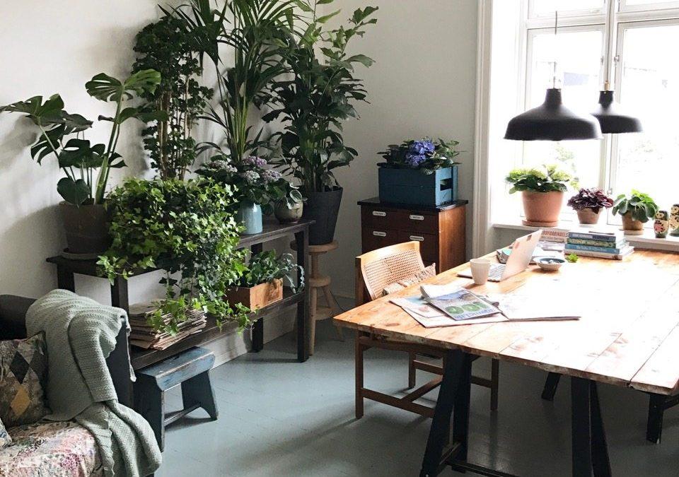 Sådan laver du en frodig blomster- og plantevæg indenfor