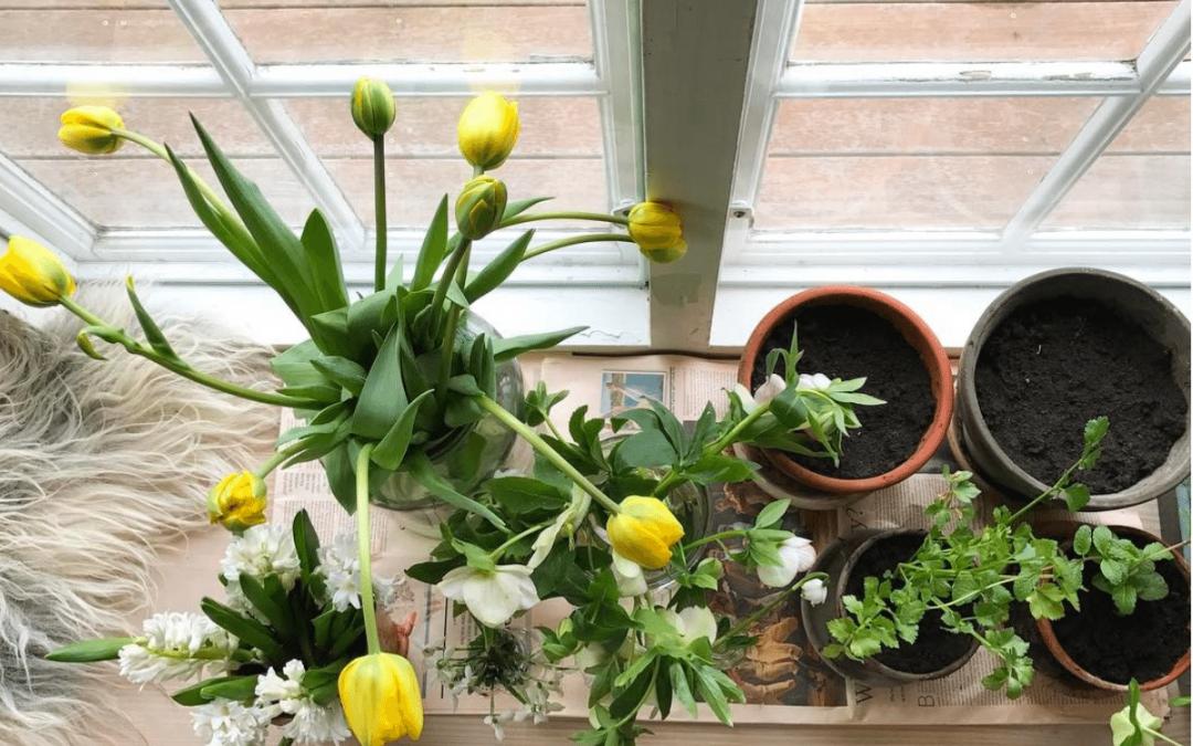 Uge 10 – ti ting du kan gøre i haven i næste uge