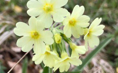 De vigtigste gøremål i haven i påsken