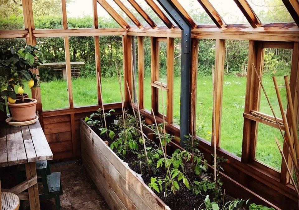 Mine bedste tips om tomater – haven i maj