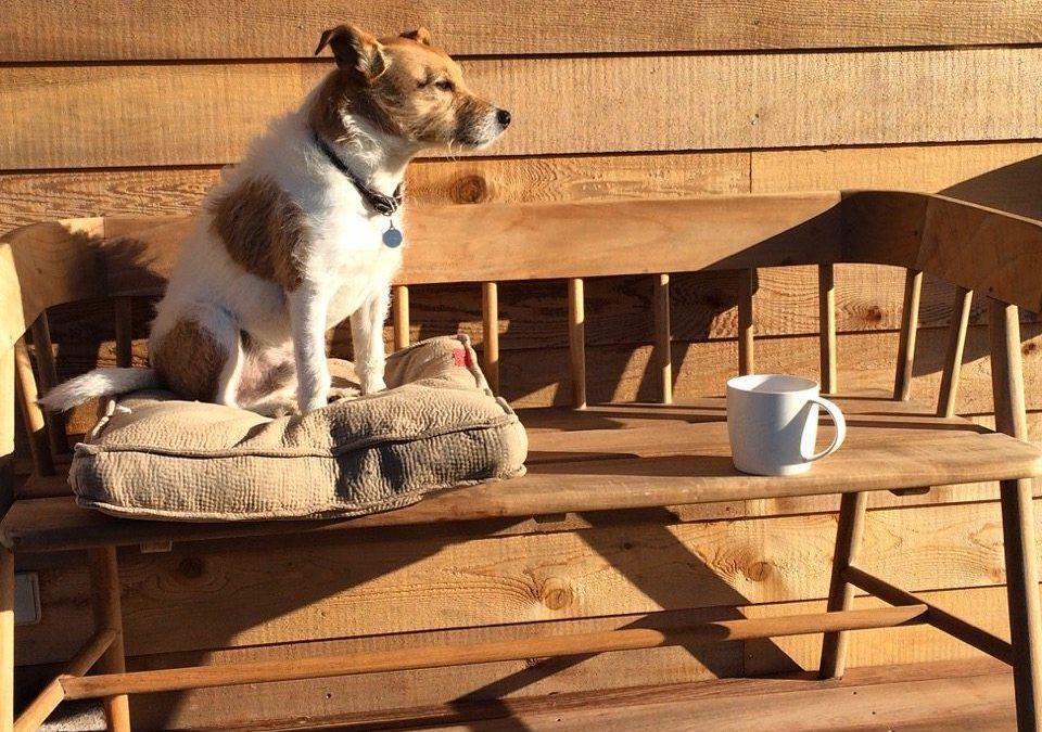 Stop stress: Alle medarbejdere burde have en kontorhund