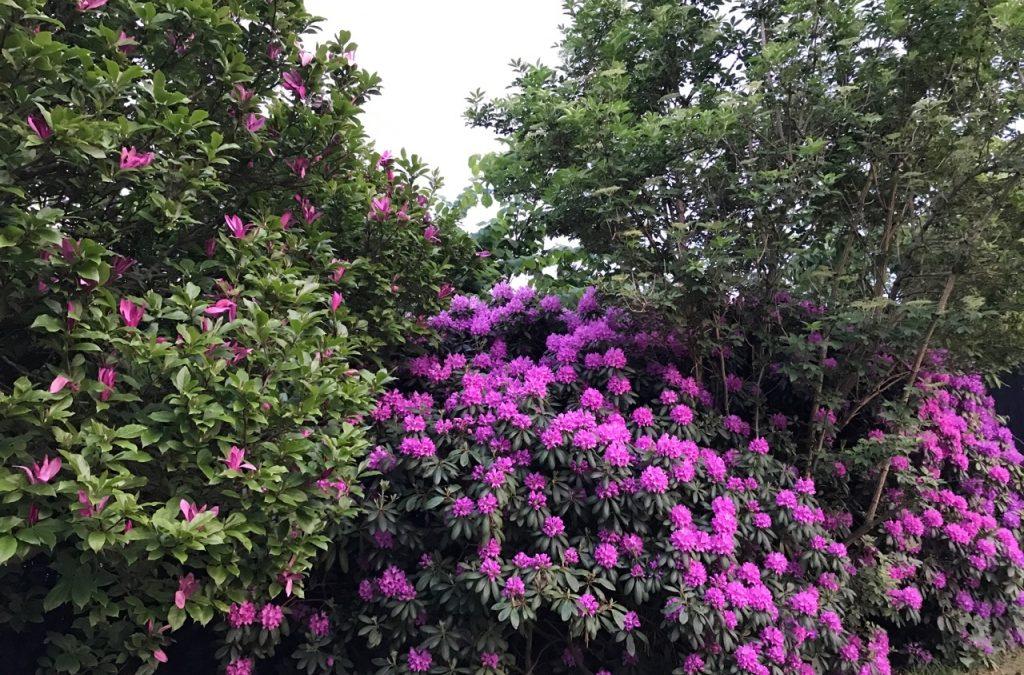 Blomster, bøger og bæredygtighed – venindebog med Salomon og Wenneberg
