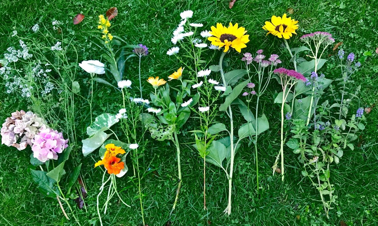 Blomster i min have lige nu