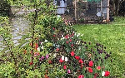 Nu skal der lægges løg – uge 41 i haven