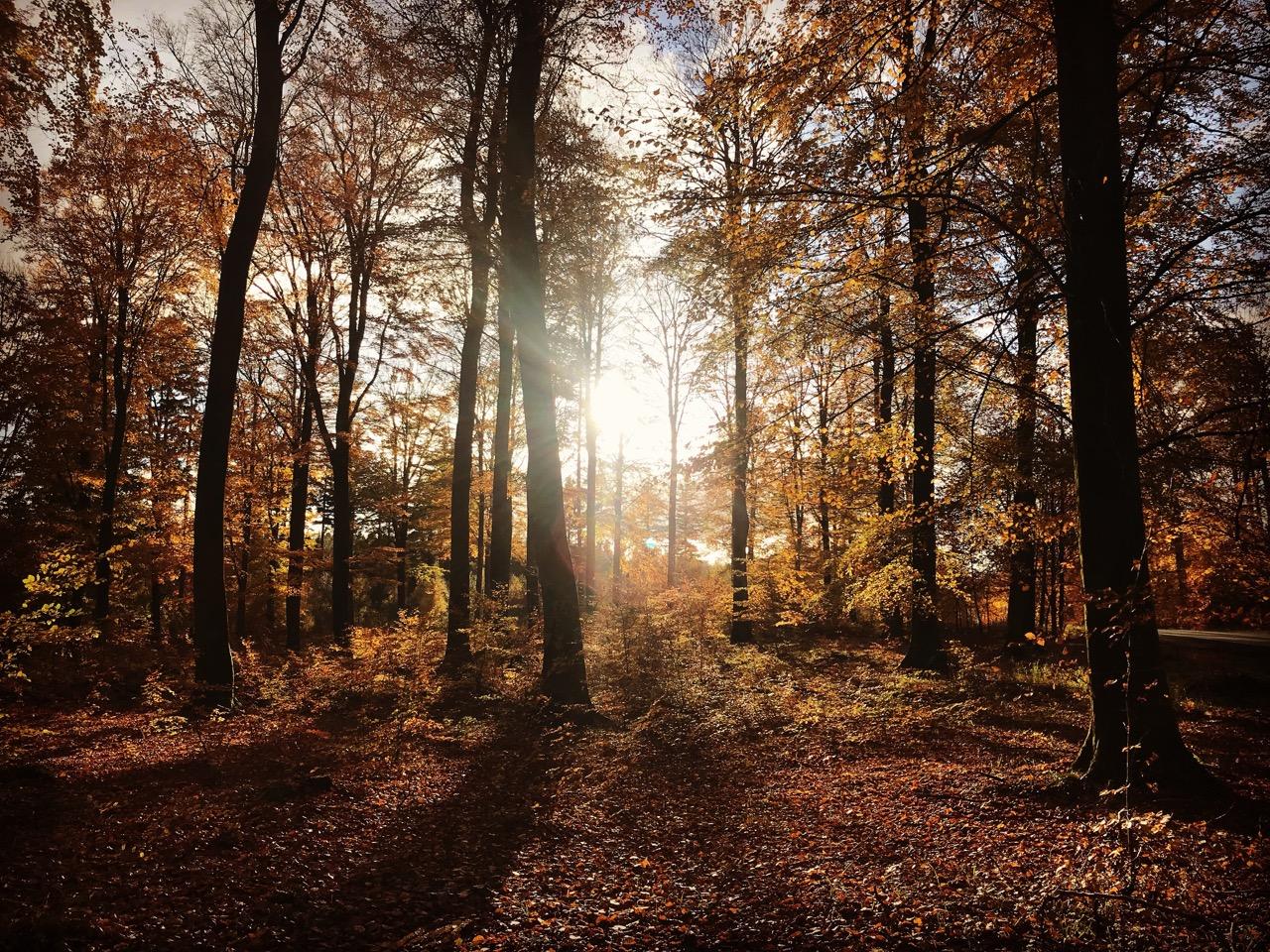 Lokal skov i novemberlys.