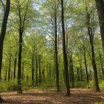 Bæredygtige beslutninger: For de unge eller for de gamle?