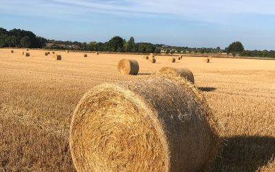 Årets økolog – vær med til at sende en tak til øko-landmændene