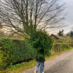 Syv tips til det mest bæredygtige juletræ