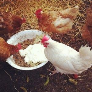 Damer elsker store hane